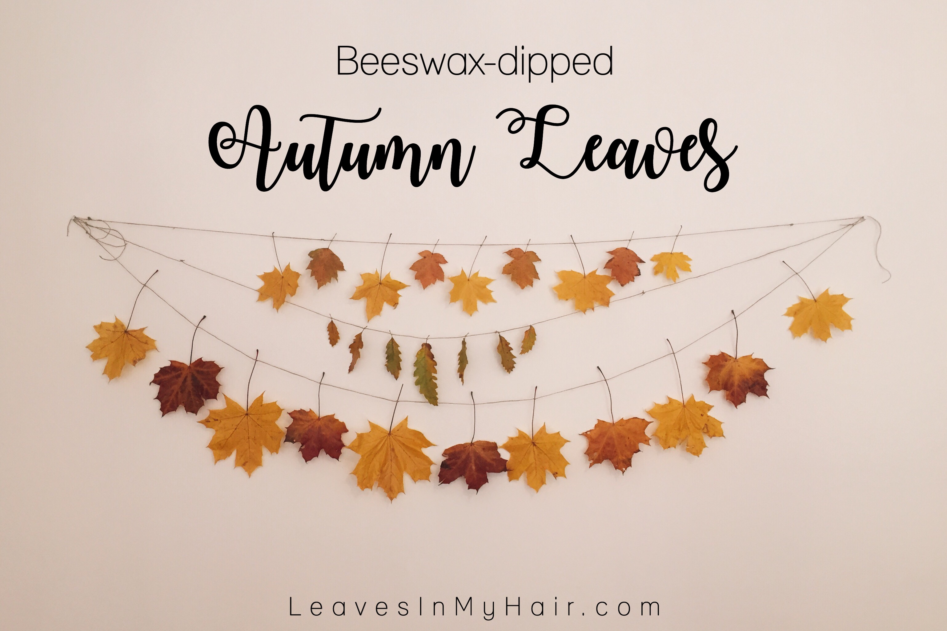 Beeswax-dipped Autumn Leaves